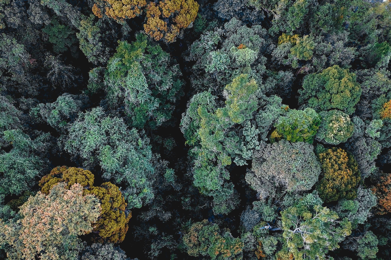 Was Sie tun können, um Wälder zu retten